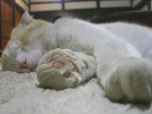 catt20110101-00