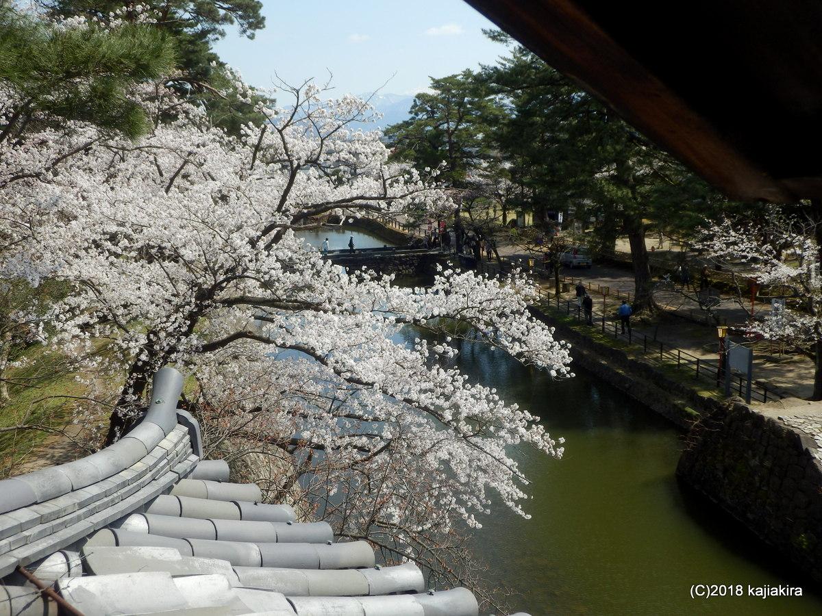 新発田城(戦国自衛隊の城)の桜