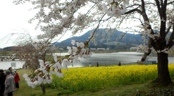 上堰潟公園と布目夫婦桜2018(新潟市西蒲区)