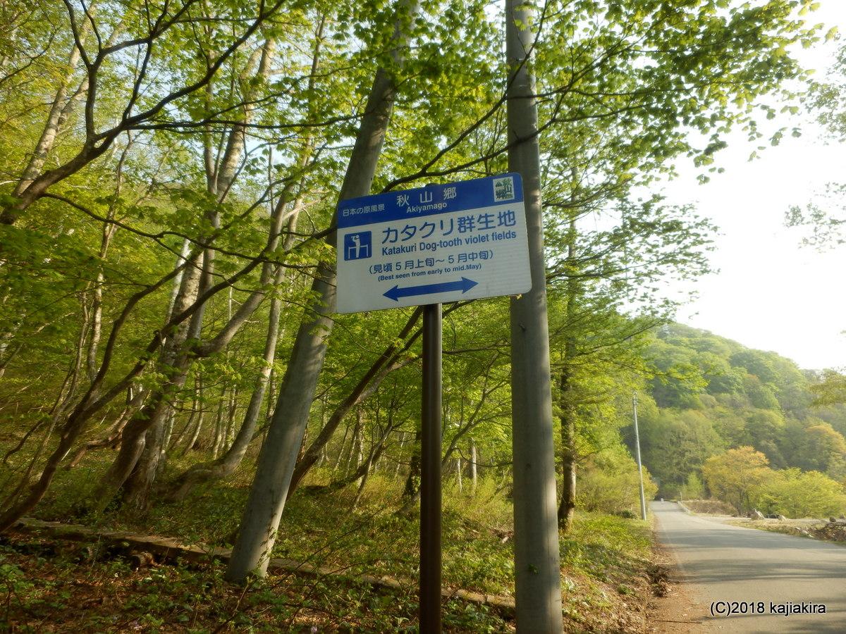 新潟県境にある秘境・秋山郷のカタクリ群生地