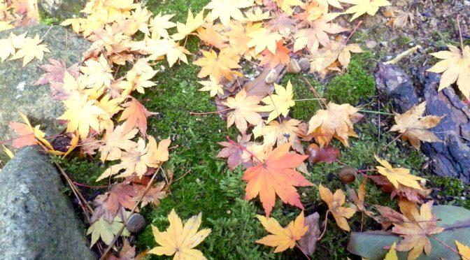 秋深し・・・。