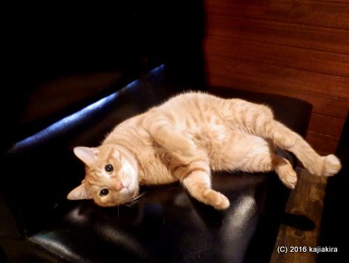 ジャズ喫茶スワンの猫2016